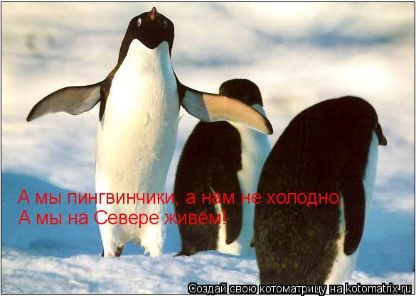 Котоматрица: А мы пингвинчики, а нам не холодно, А мы на Севере живём!