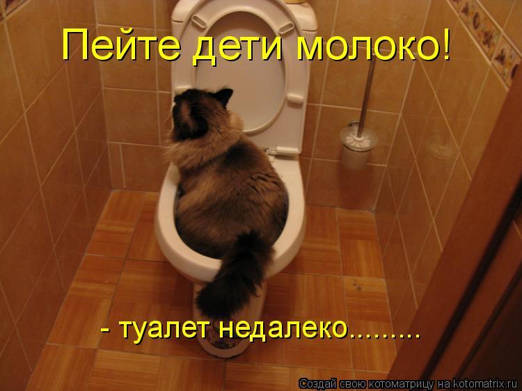 Котоматрица: - туалет недалеко......... Пейте дети молоко!