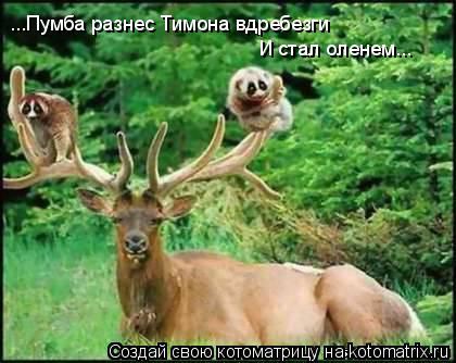 Котоматрица: ...Пумба разнес Тимона вдребезги И стал оленем...