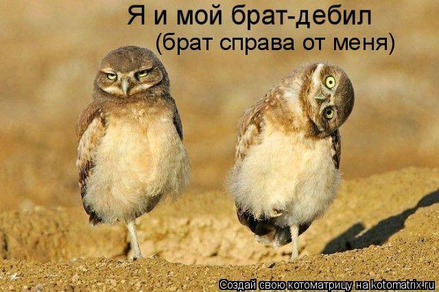 Котоматрица: (брат справа от меня)