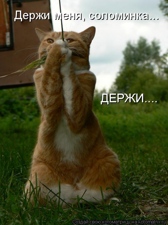 Котоматрица: Держи меня, соломинка... ДЕРЖИ....