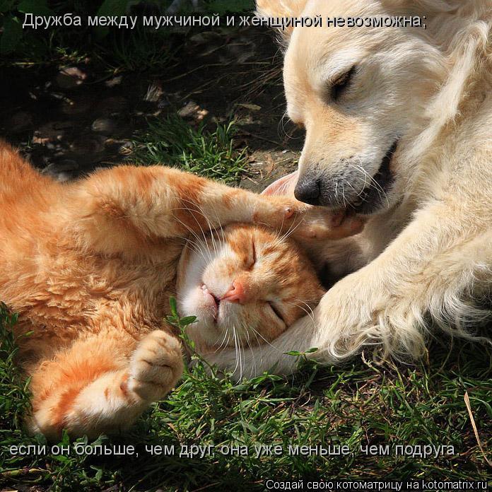 Котоматрица: Дружба между мужчиной и женщиной невозможна;   если он больше, чем друг, она уже меньше, чем подруга.