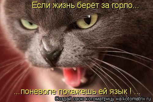 Котоматрица: Если жизнь берёт за горло... ...поневоле покажешь ей язык ! ...