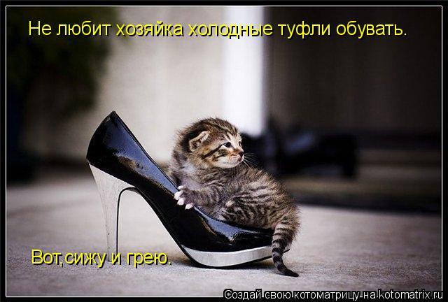 Котоматрица: Не любит хозяйка холодные туфли обувать. Вот,сижу и грею.