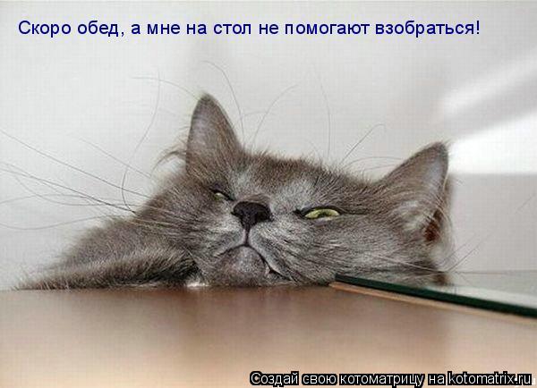 Котоматрица: Скоро обед, а мне на стол не помогают взобраться!