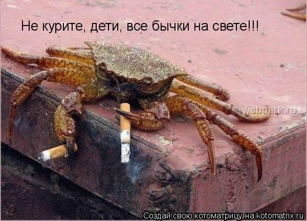 Котоматрица: Не курите, дети, все бычки на свете!!!