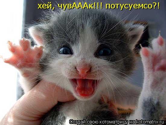Котоматрица: хей, чувАААк!!! потусуемсо?!