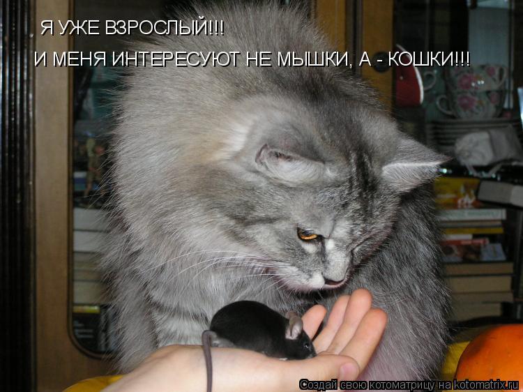 Котоматрица: Я УЖЕ ВЗРОСЛЫЙ!!! И МЕНЯ ИНТЕРЕСУЮТ НЕ МЫШКИ, А - КОШКИ!!!