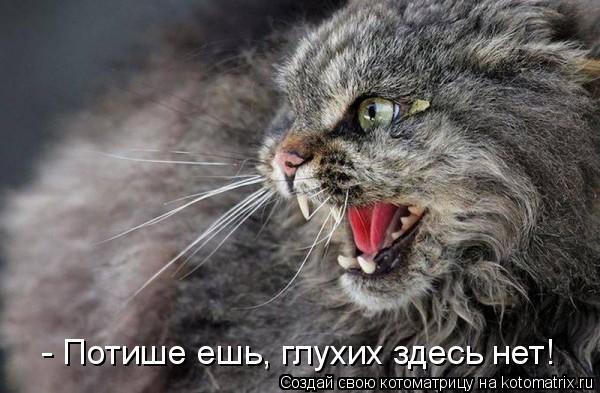 Котоматрица: - Потише ешь, глухих здесь нет!