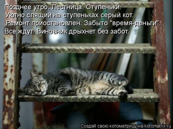 """Котоматрица: Позднее утро. Лестница. Ступеньки. Уютно спящий на ступеньках серый кот. Ремонт приостановлен. Забыто """"время-деньги"""". Все ждут. Виновник дрых"""