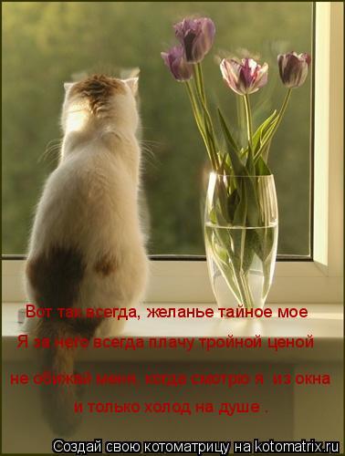 Котоматрица: Вот так всегда, желанье тайное мое  не обижай меня, когда смотрю я  из окна и только холод на душе … Я за него всегда плачу тройной ценой