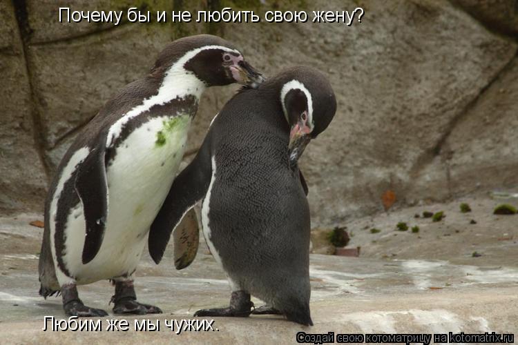 Котоматрица: Почему бы и не любить свою жену?  Любим же мы чужих.