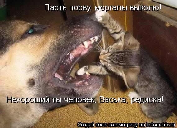 Котоматрица: Пасть порву, моргалы выколю! Нехороший ты человек, Васька, редиска!