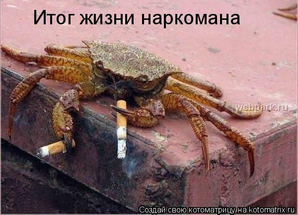 Котоматрица: Итог жизни наркомана