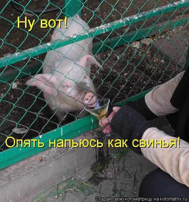 Котоматрица: Ну вот! Опять напьюсь как свинья!