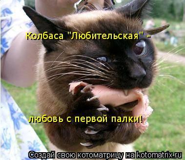 """Котоматрица: Колбаса """"Любительская"""" - любовь с первой палки!"""
