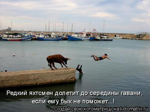 Котоматрица: Редкий яхтсмен долетит до середины гавани, если ему бык не поможет...!