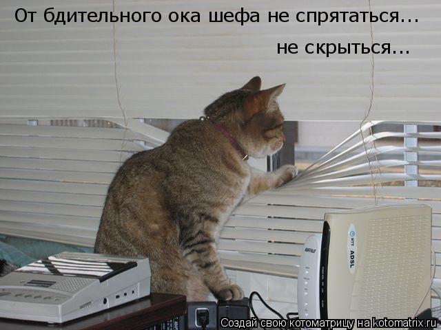 Котоматрица: От бдительного ока шефа не спрятаться... не скрыться...