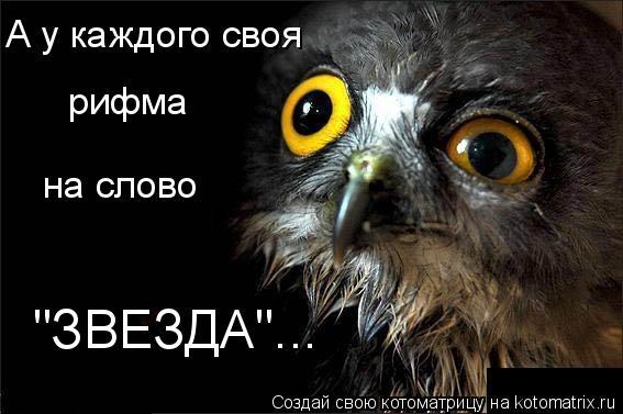 "Котоматрица: А у каждого своя рифма на слово ""ЗВЕЗДА""..."