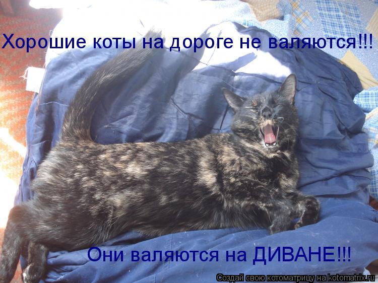 Котоматрица: Хорошие коты на дороге не валяются!!! Они валяются на ДИВАНЕ!!!