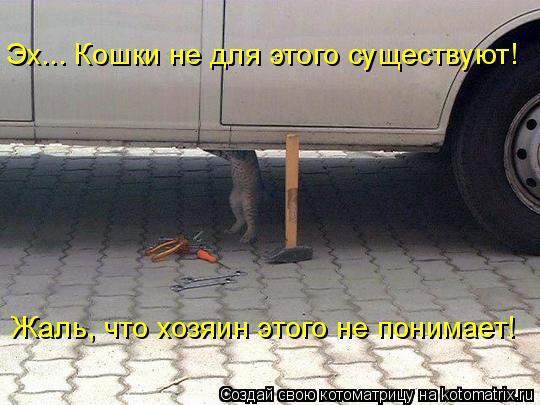 Котоматрица: Эх... Кошки не для этого существуют! Жаль, что хозяин этого не понимает!