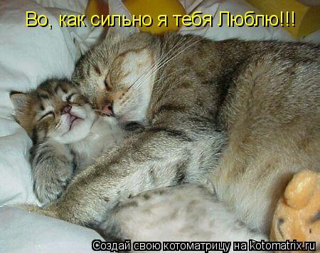Котоматрица: Во, как сильно я тебя Люблю!!!