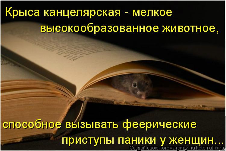 Крыса канцелярская - мелкое высокообразованное животное, способное вызывать феерические приступы паники у женщин...