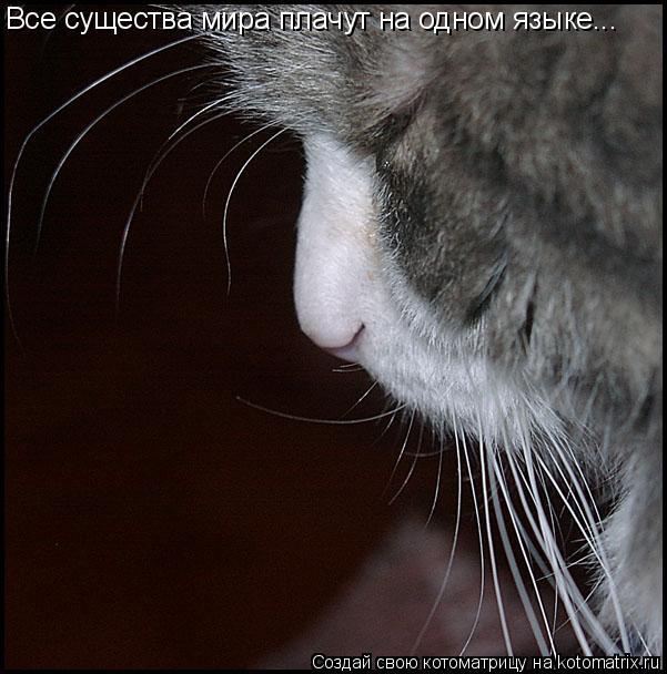 Котоматрица: Все существа мира плачут на одном языке...