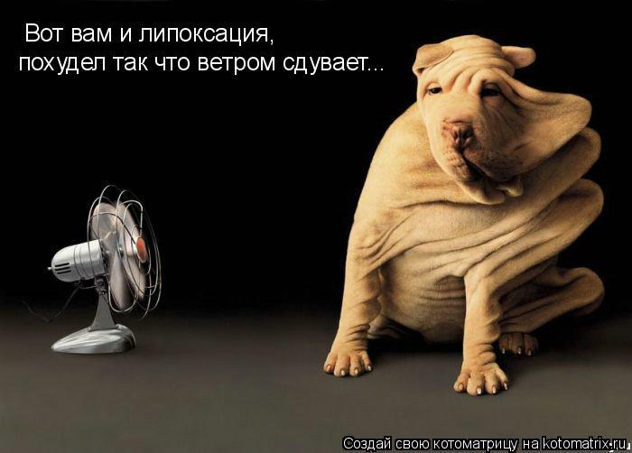 Котоматрица: Вот вам и липоксация,  похудел так что ветром сдувает...