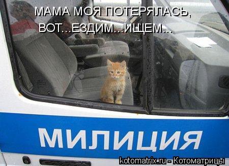 Котоматрица: МАМА МОЯ ПОТЕРЯЛАСЬ, ВОТ...ЕЗДИМ...ИЩЕМ...