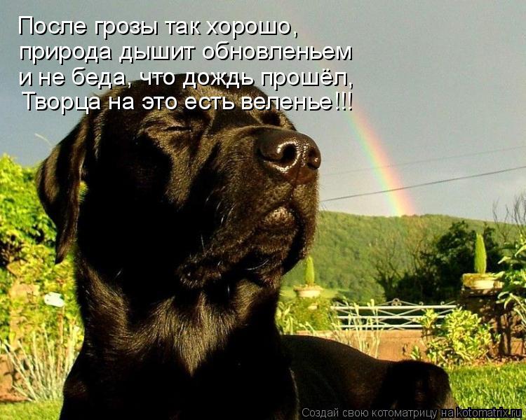 Котоматрица: После грозы так хорошо, природа дышит обновленьем и не беда, что дождь прошёл, Творца на это есть веленье!!!