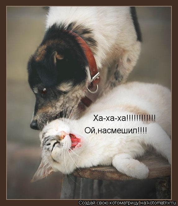 Котоматрица: Ха-ха-ха!!!!!!!!!!!! Ха-ха-ха!!!!!!!!!!!! Ой,насмешил!!!! Ой,насмешил!!!!