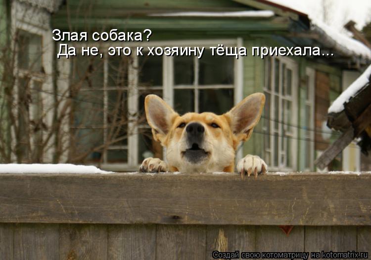 Котоматрица: Да не, это к хозяину тёща приехала... Злая собака?