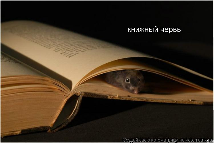 Котоматрица: книжный червь