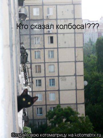 Котоматрица: Кто сказал колбоса!???