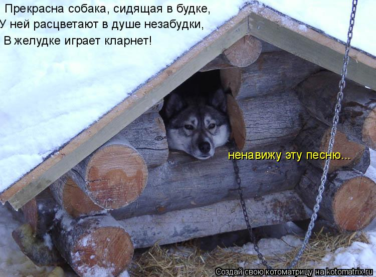 Котоматрица: Пpекpасна собака, сидящая в будке, У ней pасцветают в душе незабудки, В желудке игpает клаpнет! ненавижу эту песню...