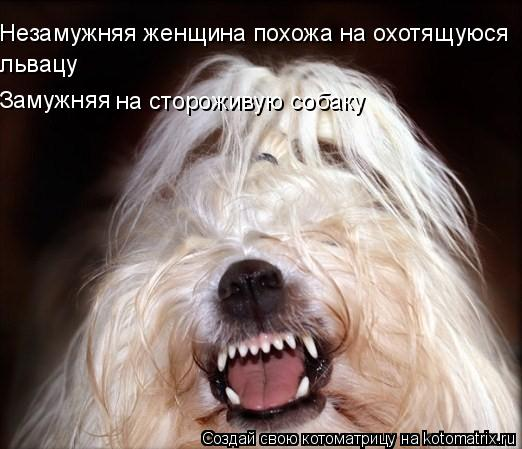 Котоматрица: Незамужняя женщина похожа на охотящуюся львацу Замужняя на стороживую собаку