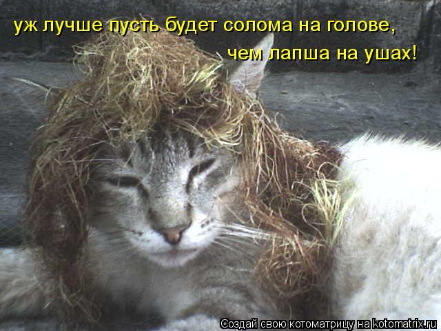 Котоматрица: уж лучше пусть будет солома на голове, чем лапша на ушах!