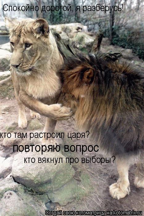 Котоматрица: Спокойно дорогой, я разберусь!  кто там растроил царя? повторяю вопрос кто вякнул про выборы?