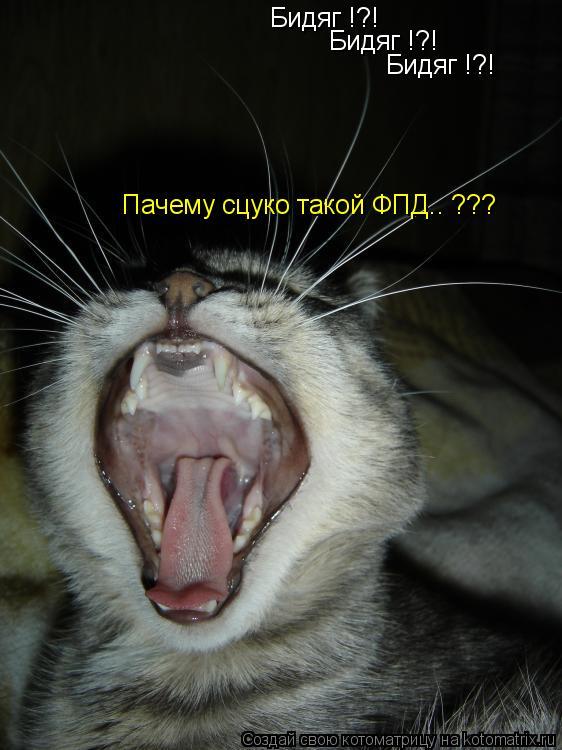 Котоматрица: Бидяг !?! Бидяг !?! Бидяг !?! Пачему сцуко такой ФПД.. ???