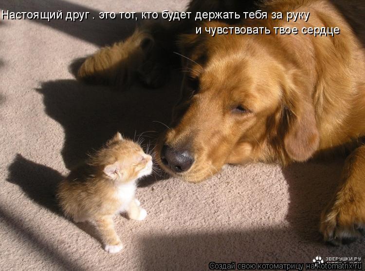 Котоматрица: Настоящий друг – это тот, кто будет держать тебя за руку  и чувствовать твое сердце