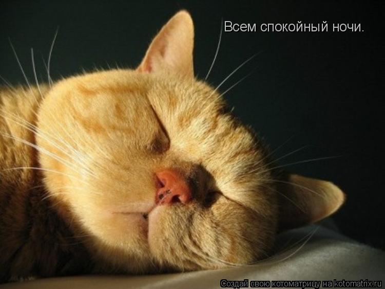 Котоматрица: Всем спокойный ночи.