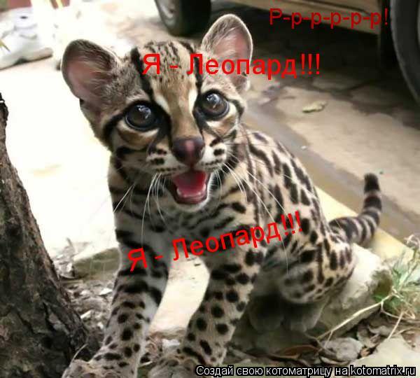Котоматрица: Р-р-р-р-р-р! Я - Леопард!!! Я - Леопард!!!