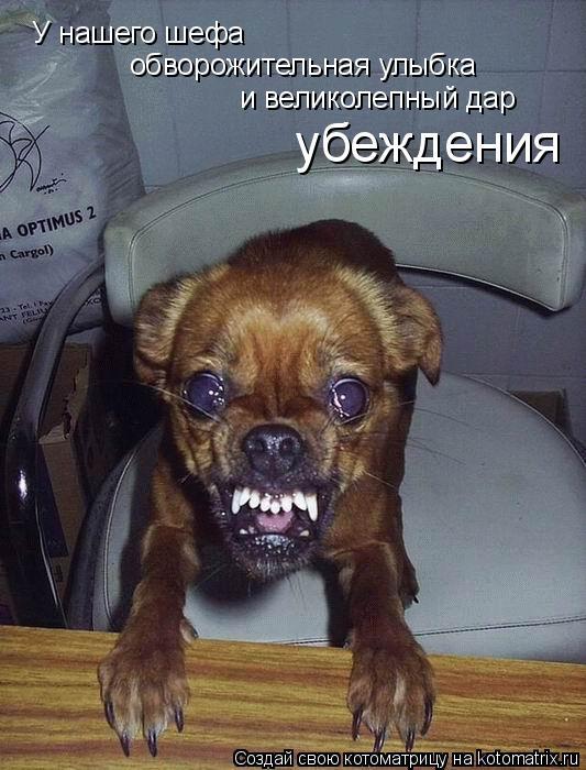 Котоматрица: У нашего шефа обворожительная улыбка и великолепный дар убеждения