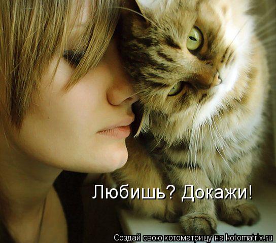 Котоматрица: Любишь? Докажи!