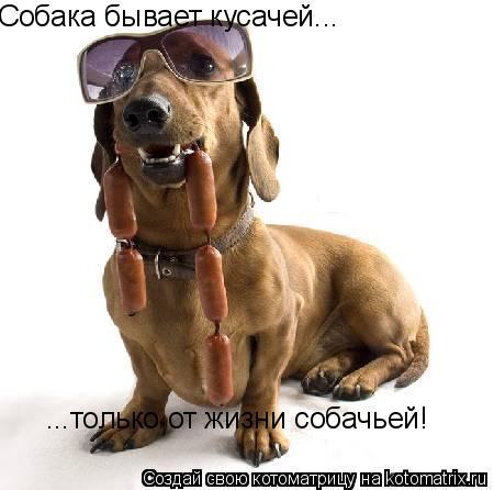 Котоматрица: Собака бывает кусачей... ...только от жизни собачьей!