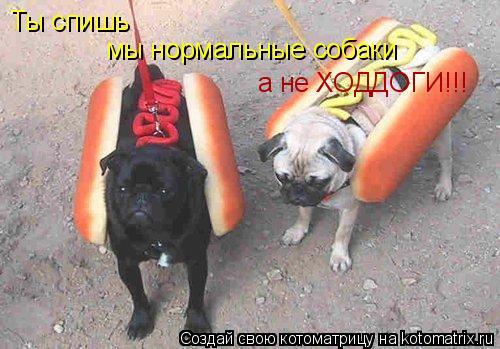 Котоматрица: Ты спишь мы нормальные собаки а не ХОДДОГИ!!!