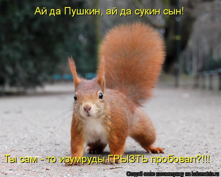 Котоматрица: Ай да Пушкин, ай да сукин сын! Ты сам - то изумруды ГРЫЗТЬ пробовал?!!!