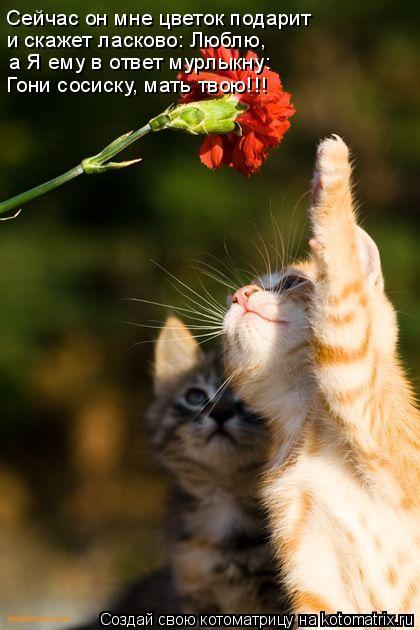 Котоматрица: Сейчас он мне цветок подарит и скажет ласково: Люблю, а Я ему в ответ мурлыкну: Гони сосиску, мать твою!!!
