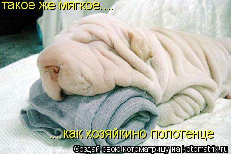 Котоматрица: такое же мягкое.... ....как хозяйкино полотенце